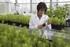 Investigaciones sobre la propagación de híbridos de pino tolerantes al estrés hídrico mediante un sistema de embriogénesis somática