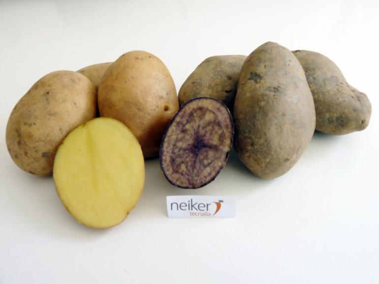 Nuevas variedades de patata