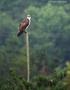 Photo Urdaibai Bird Centre