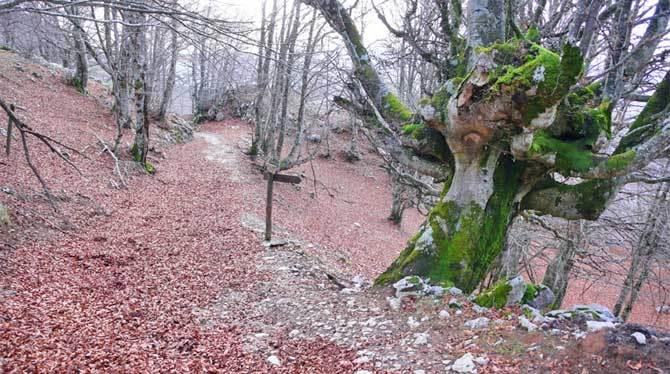 Aratz (Itelazpi Argazkia)