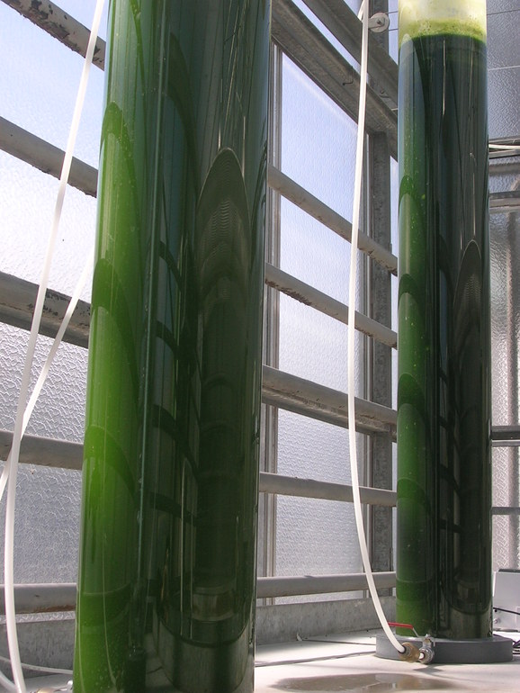 Microalgas del litoral vasco