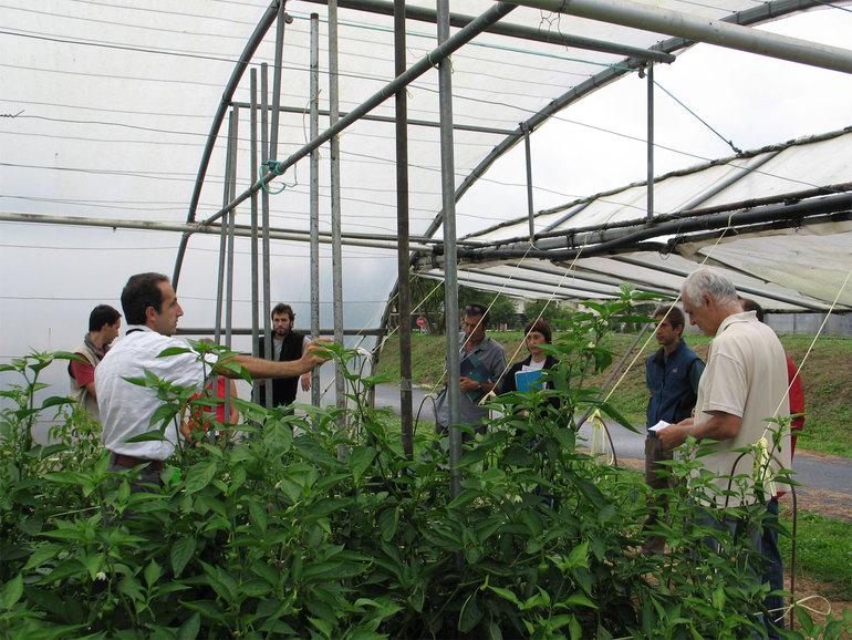 Sektorea Saretzen unirá a investigadores y agentes del sector agroalimentario