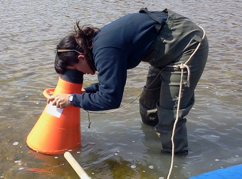 A la búsqueda de macrófitos