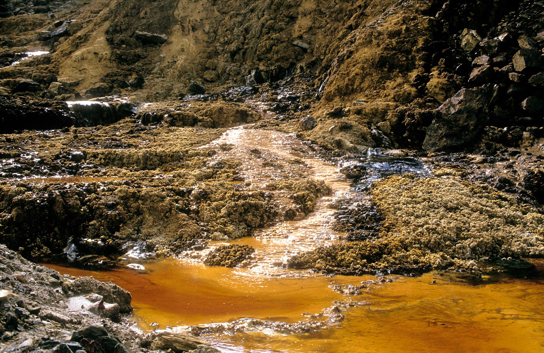 Polluted-soils.jpg