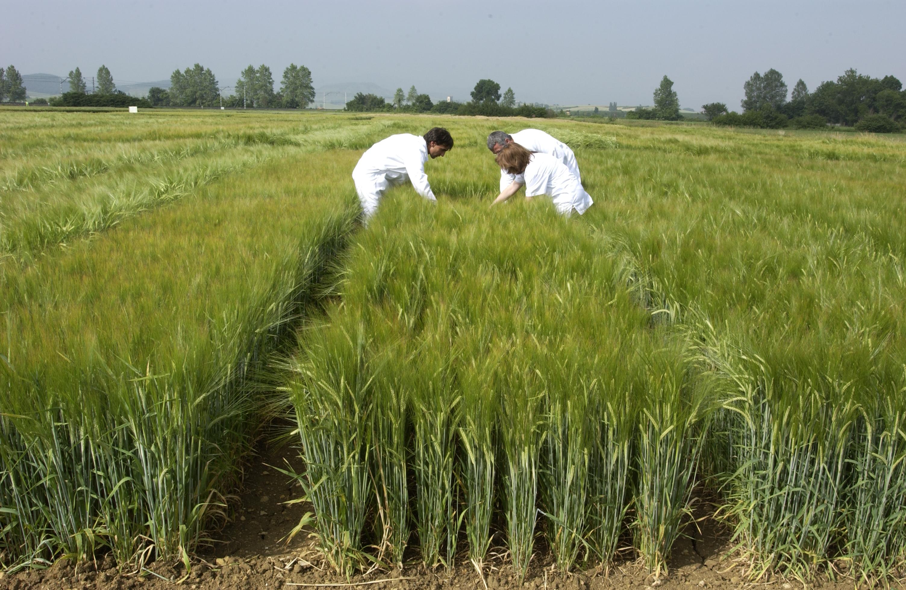 Agricultura_ecologica.jpg