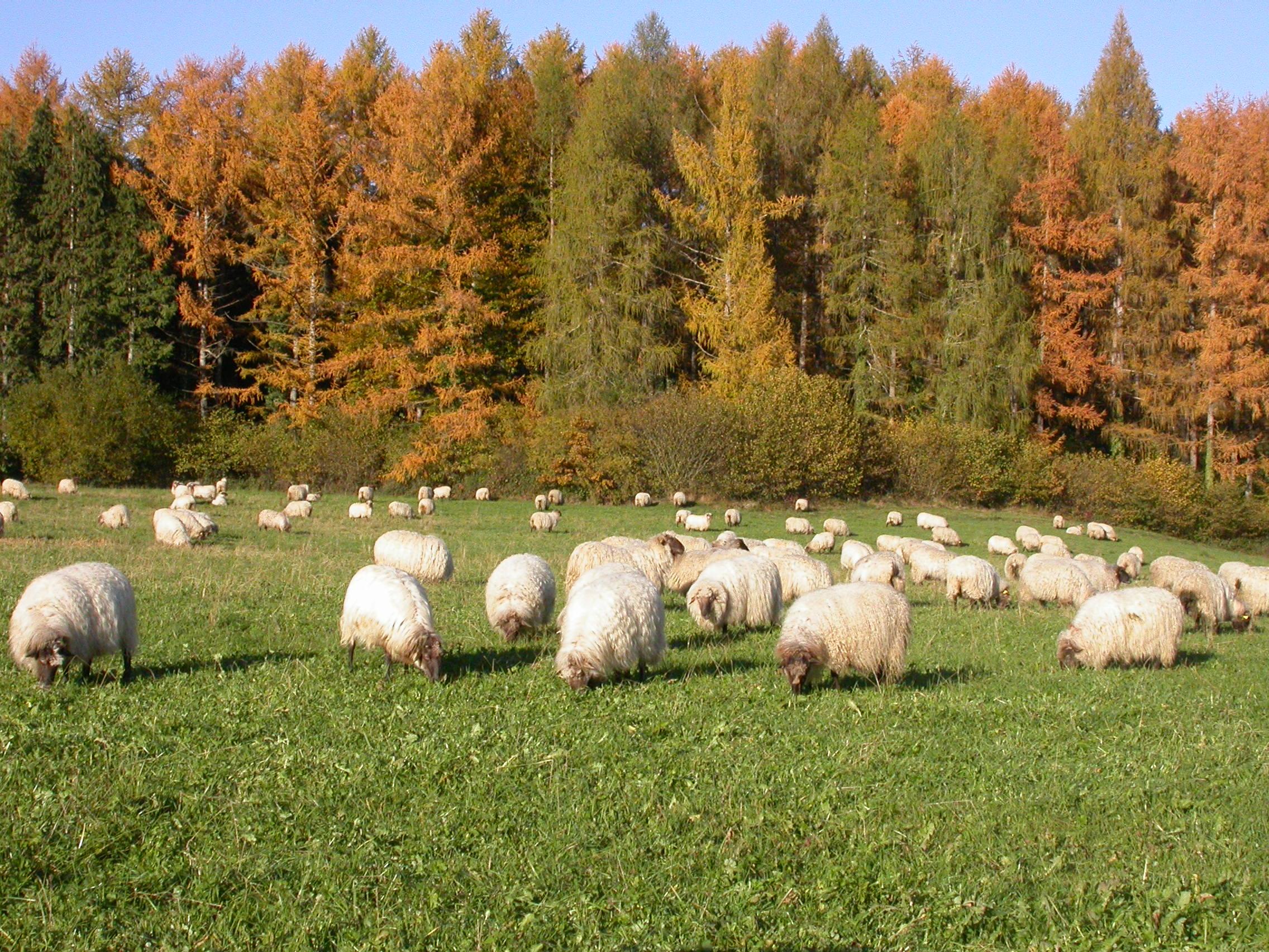 Sheepnet.JPG