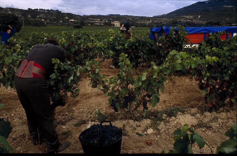 (Foto archivo Mikel Arrazola/Vendimia Rioja Alavesa)