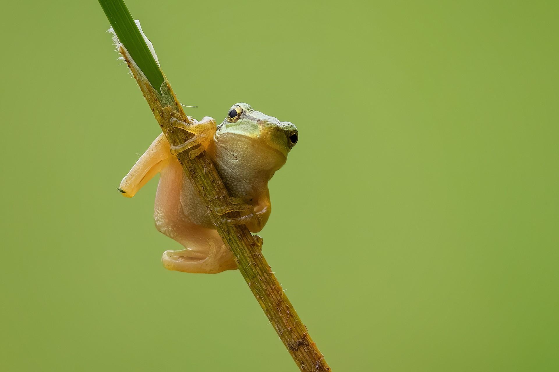 Biodiversidad_1.jpg