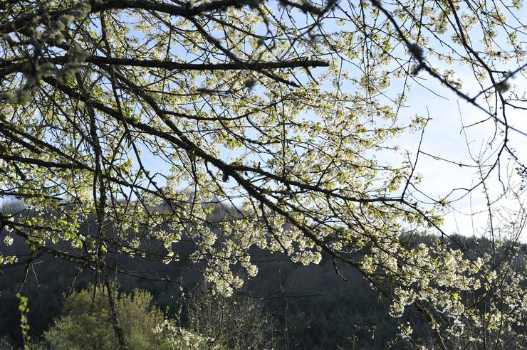 Primavera_1.jpg