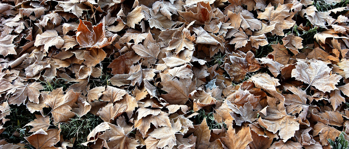 Cover compost 500 01